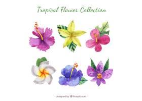 可爱的水彩画热带花卉收藏_2719474