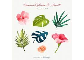 可爱的水彩画热带花卉收藏_2719476