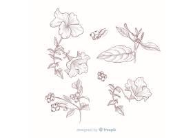 供植物学收藏的树叶和花朵_5445496