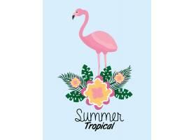 夏季热带弗拉门戈可爱的花叶异国情调的叶_5674895