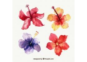 水彩画风格的热带花卉收藏_2207644