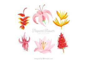 水彩画风格的热带花卉收藏_2207656