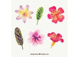 水彩画风格的热带花卉收藏_2207684