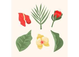 热带花叶收藏_7974229