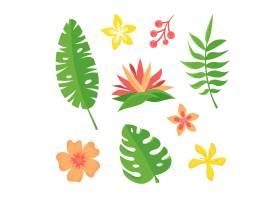 热带花叶收藏_8135442