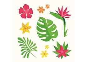 热带花叶收藏_8135446