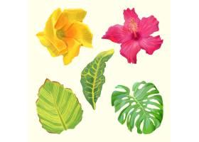 热带花叶收藏_8135453