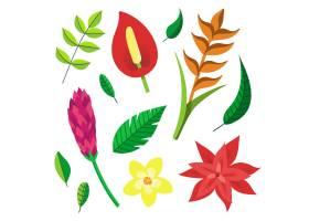 热带花叶收藏_8149535
