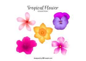 可爱的水彩画热带花卉收藏_2719467