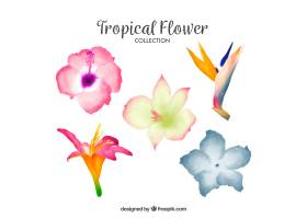 可爱的水彩画热带花卉收藏_2719468