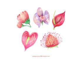 可爱的水彩画热带花卉收藏_2719469