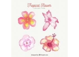 可爱的水彩画热带花卉收藏_2719477