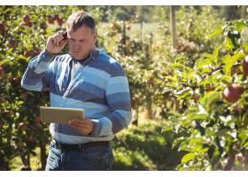 苹果园农民边打手机边使用数字平板电脑_5351361