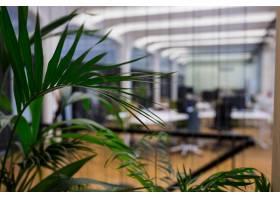 盆栽植物的特写镜头_977375