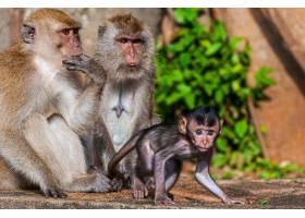 美丽的照片有猴子一家有妈妈爸爸和小_9282678