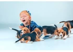 灰色墙上的快乐女孩和小猎犬_7540147