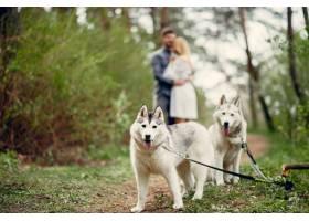一对美丽的夫妇带着一条狗在夏天的森林里_5011123