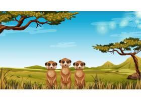 非洲风景中的猫鼬_4182483