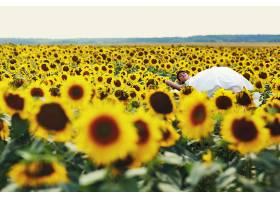 在阳光明媚的日子里新娘躺在向日葵上_1621910