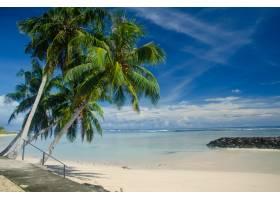 棕櫚樹和海環繞的海灘在一個藍色多云天空下_13962572