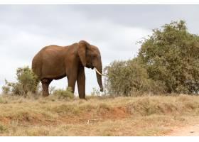 走在干燥領域的非洲大象的美好的射擊_13962911