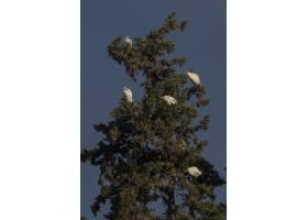 低角度射擊白鷺在日落時_13962683