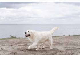 走在海滩的逗人喜爱的狗_15365710