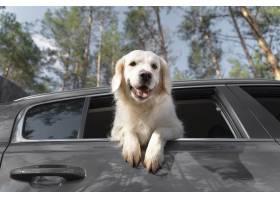 在汽車的低角度愉快的狗_15365712