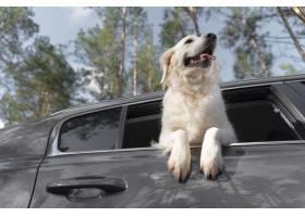 在汽車的低角度笑臉狗_15365709