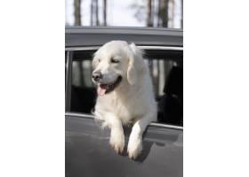 在汽車的低角度逗人喜愛的狗_15365703