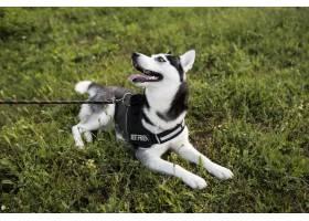 逗人喜爱的狗坐草外面_15599157