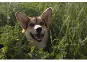逗人喜爱的笑脸狗本质上_15987560