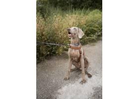 逗人喜爱的笑脸狗用户外皮带_15599150