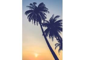 棕榈树剪影在日落的_974608