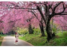 游人在桃红色樱花拍一张照片在春天_13249955