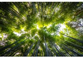 竹林美好的风景在森林里arashiyama京都的森_3707168