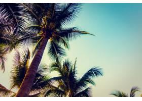 剪影与日落的棕榈树_3661058