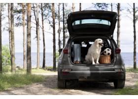在汽车后备箱的逗人喜爱的狗_15365715