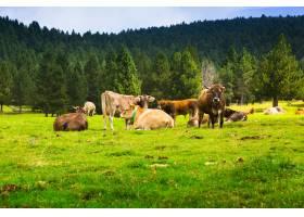 在草地上很少有奶牛_1631499