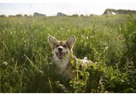 在草的逗人喜爱的狗_15987559