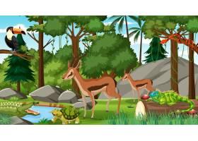 与其他野生动物的两只斑羚在白天场面的森林_15657609