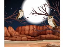 与岩石山和挖洞猫头鹰风景的沙漠在夜场面_15657356