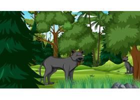 在森林场面的黑豹豹与许多树_16445210