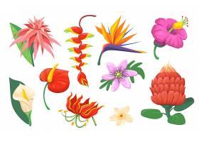 明亮的夏威夷异国情调的鲜花平面套_13146179