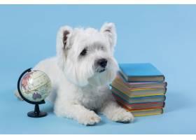 可爱的小狗回到学校_14724868