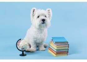可爱的小狗回到学校_14724908