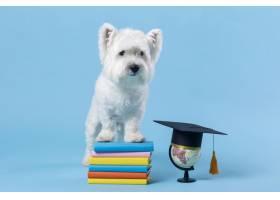 可爱的小狗回到学校_14724912