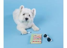 可爱的小狗回到学校_14724913