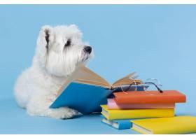 可爱的小狗回到学校_14724915