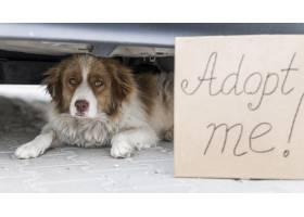 坐在车下的逗人喜爱的狗户外用采用我标志_10296103